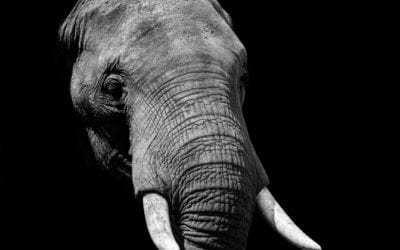 No growth as people ignores the elephant in the room